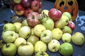 Få æblerne presset til festival