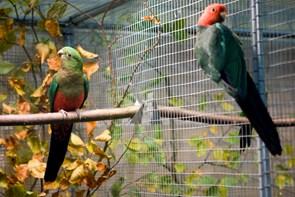 Nordjyllands største fugleudstilling