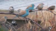 Fugleudstilling på Ridemandsmølle