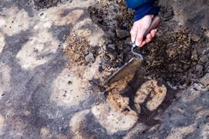 Arkæologisk opdagelse i Østerild: Kvæget måtte flygte fra Thy