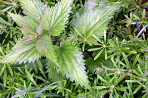 Lad være med at eksperimentere, når du spiser vilde planter, lyder rådet fra forskerne i en ny undersøgelse.