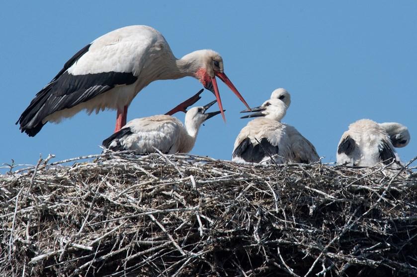 Søndag er årets første stork landet i Danmark. Den er landet ved Aakirkeby på Bornholm, oplyser Storkene.dk.