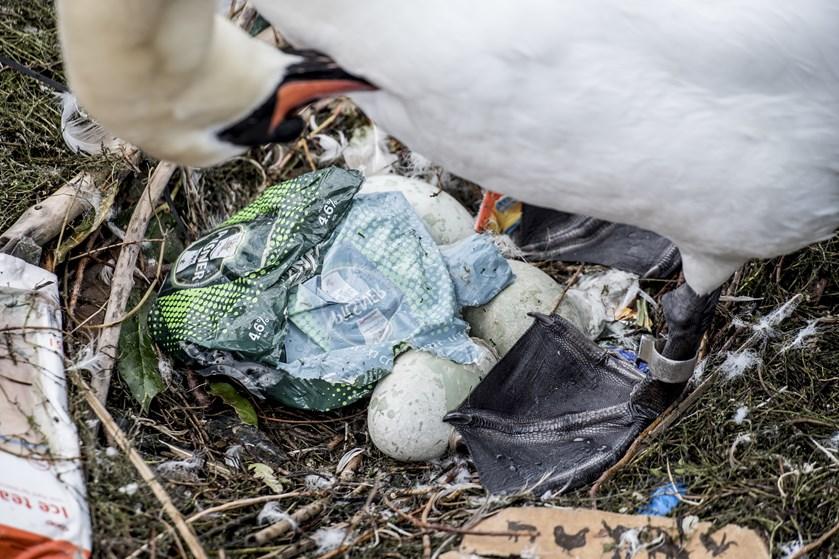 I forskningens og naturens navn beder Verdensnaturfonden borgere om at bruge et par timer på at samle plastik.