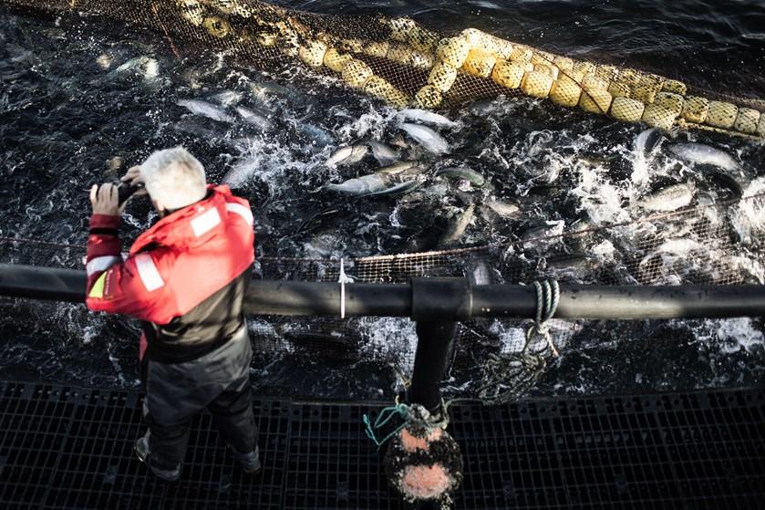 Efter hård kritik for miljøforurening og politianmeldelser skal dansk havbrug nu gennem grundig kulegravning.