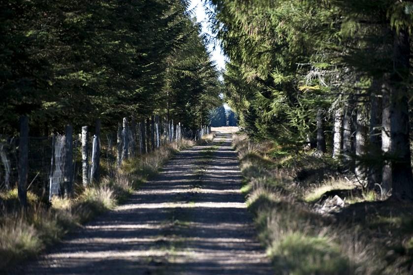 Socialdemokratiet foreslår, at man opretter flere naturparker og gør naturen mere tilgængelig.
