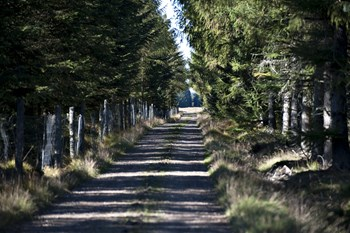 Partierne vil have trepartsforhandlinger på naturens vegne og foreslår 75.000 hektar urørt skov i nyt udspil.