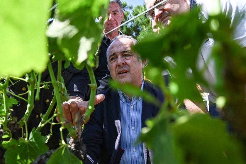 Hagl så store som bordtennisbolde har ødelagt afgrøder i Frankrig. Biler og hustage er også hårdt medtaget.