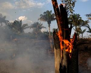 Antallet af brande i Brasiliens regnskov er vokset eksplosivt under præsident Jair Bolsonaro.
