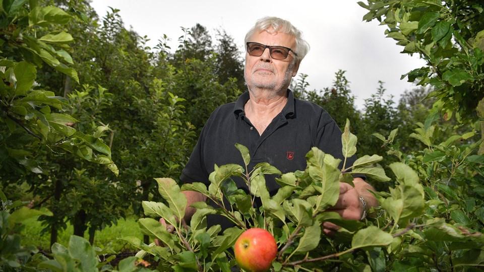Selv om æblehøsten bliver dårlig regner Finn Brix-Mikkelsen bestemt at fortsætte til næste år, der bliver hans 54. sæson som frugtavler. Foto: Claus Søndberg