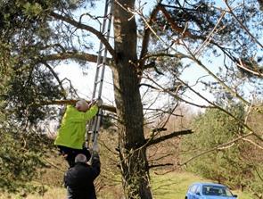 Glade fugle-entutiaster: 50 fuglekasser sat op - og tre er allerede beboet