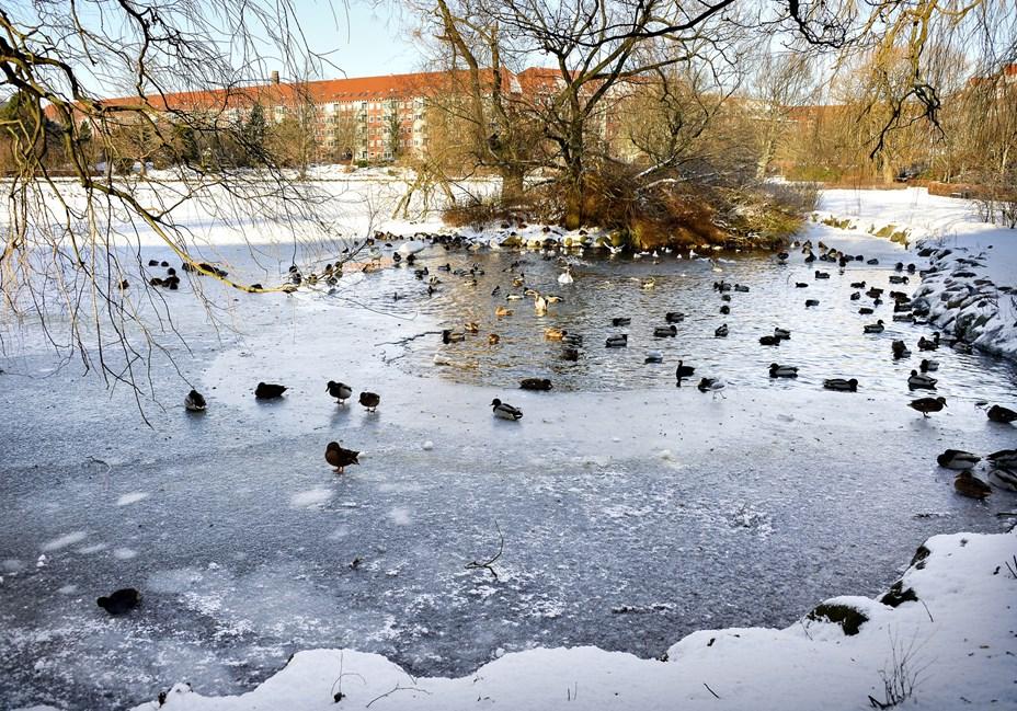 DMI har prognosen klar: Sådan bliver vinteren