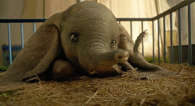 Dumbo null