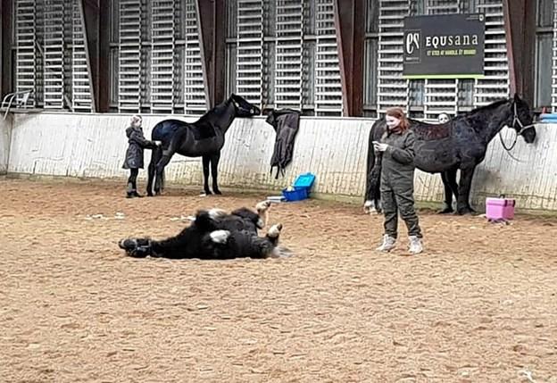 Det var ikke kun de tobenenede, der så ud til at hygge sig, da juniorudvalget i Ranum Rideklub invitererede til hestehygge. Privatfoto