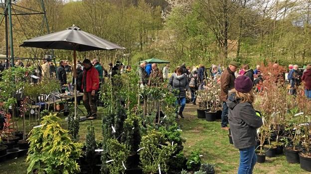 25. maj er der plantemarked i Viveterp Landbohave nær Hadsund.  Privatfoto