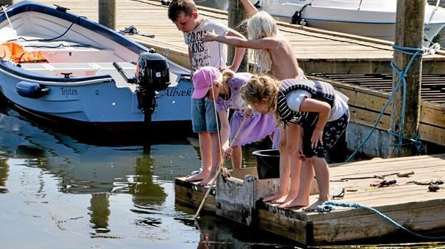 Havnen i Ålbæk var i weekenden et overflødighedshorn af aktiviteter. Foto: Peter Jørgensen Peter Jørgensen