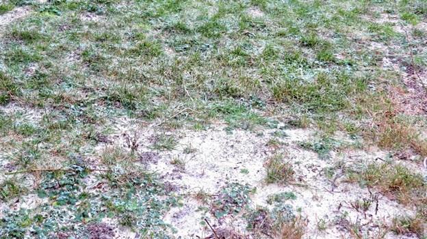 Sand på græsplænen. Foto: Kirsten Olsen Kirsten Olsen
