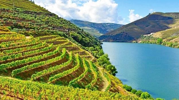Den nye butik sælger alt fra frisk frugt og grønt over tilbehør som tapenade, dolce de leite og honning og til vin og portvin. Alt sammen fra Portugal.Privatfoto
