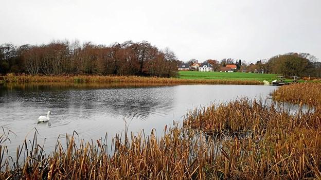 Hellum Møllesø. Foto: Jørgen Larsen