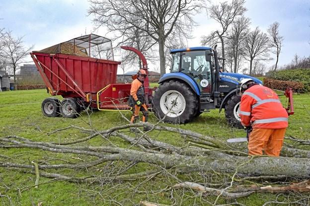 Lise Andersen (th.) og Allan Friis, fra Thisted Kommunes Park og Vejafdeling, er ved at fælde de aldrende og for nogens vedkommende syge træer i Anlægget i Hurup. Foto: Ole Iversen