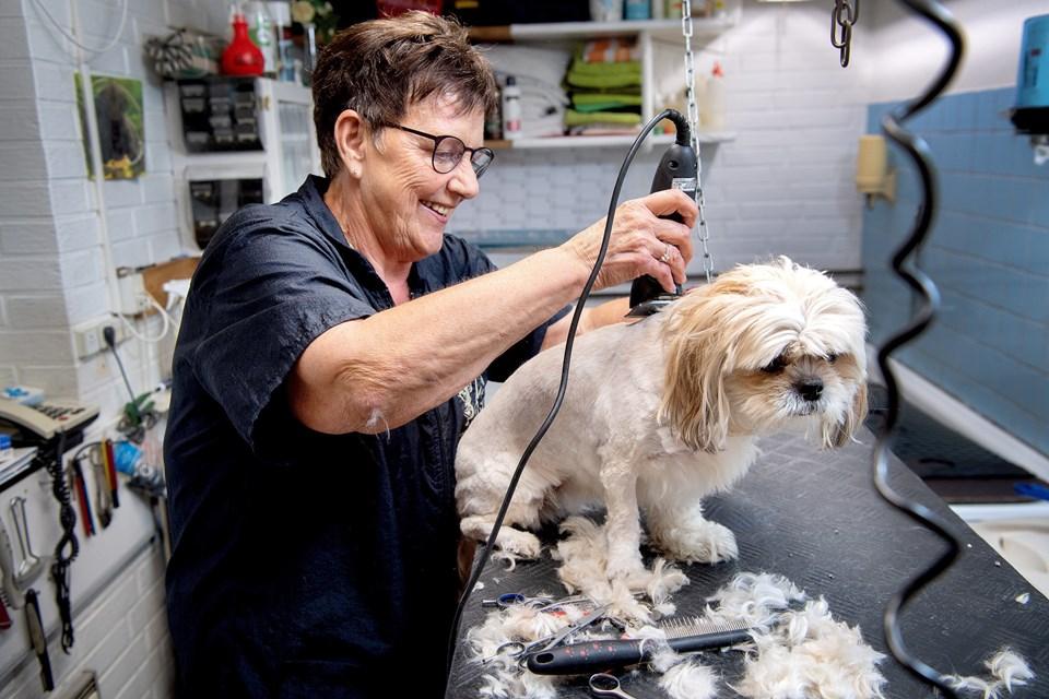 Mona Hansen er i fuld gang med at ordne Daisi fra Aabybro, mens hun snakker beroligende til den lille hund.