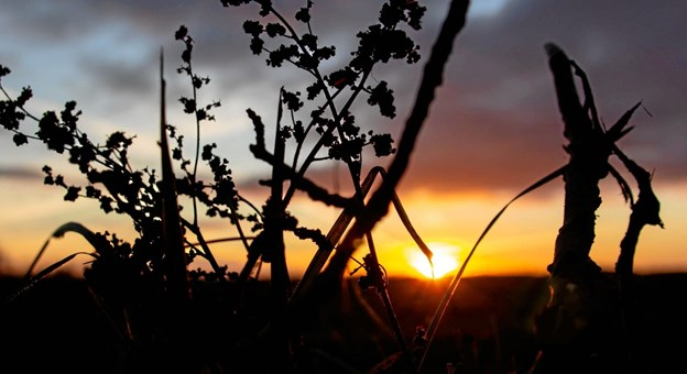 Solnedgang en søndag aften. Foto: Nanna Højbjerg