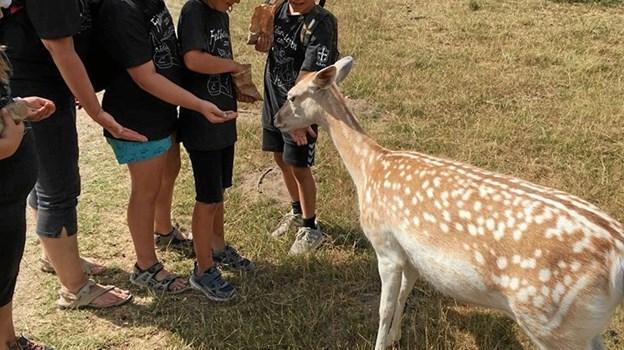 At håndfodre dyrene var en oplevelse, som børnene fr Ålbæk fandt spændende. Privatfoto.