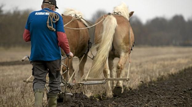Hestespand i markarbejde er et sjældent syn nu til dags. Men i lørdags kunne man opleve landboarbejdet som det tog sig ud før traktorernes indtog. Foto: Allan Mortensen Allan Mortensen