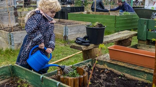 Flere gange om året er der fælles arbejdsdage, hvor man mødes og ordner haverne. Foto: Lasse Sand