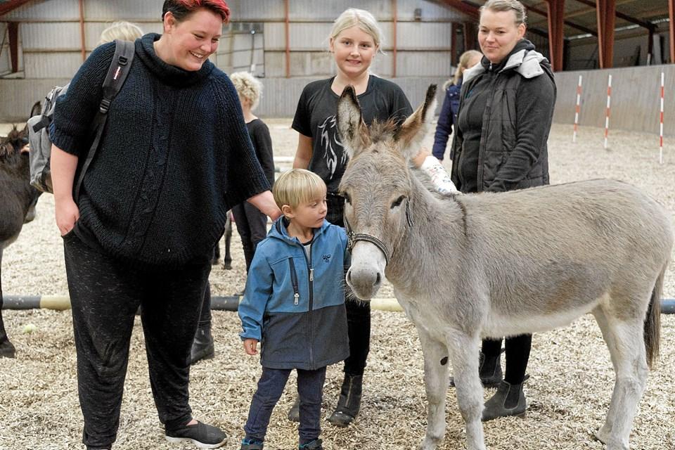 Rideklubben SRV Tyrsig har foruden ponyer og heste også æslerne Conrad, Asger og Anton. Æslerne er klubbens maskotter, der er hyggedyr for børnene. Foto: Niels Helver