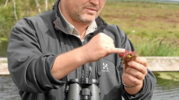 Oplev mosens rige dyre- og planteliv – se om I kan finde den kødædende plante Soldug. Foto: privat.