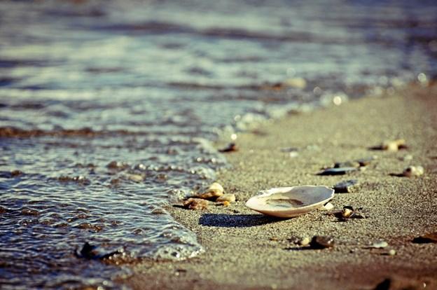 Ravet gemmer sig på stranden. Frode Abrahamsen