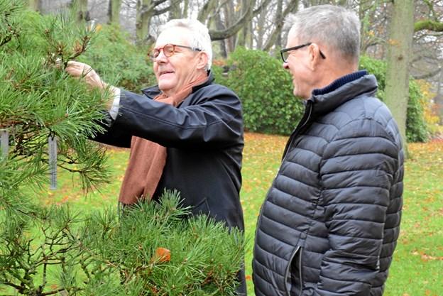 Jens Jørgen Calundan sætter skiltet på gavetræet bistået af Preben Reinholt