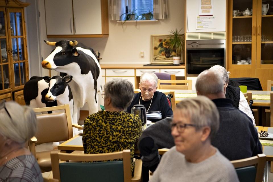 Der er kommet et helt dyrehold på Elmehøj i Ø. Brønderslev - og på fire andre plejehjem i kommunen. Foto: Kurt Bering