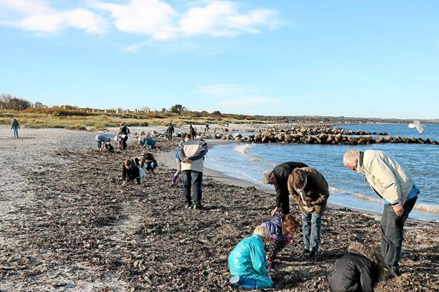 """Al opskyllet materiale fra havet blev grundigt undersøgt af deltagerne på ravsliber Frantz Kristensens """"Find rav"""" kursus."""