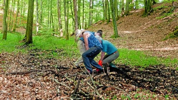 Skovforsker Jens Peter Skovsgaard og to engelske kolleger i gang med at tage boreprøve i skovbunden i Tolne Skov
