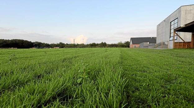 Det nye græstæppe på 'Garbage Ground' i Hals er ikke endnu ikke brugbart. Foto: Allan Mortensen