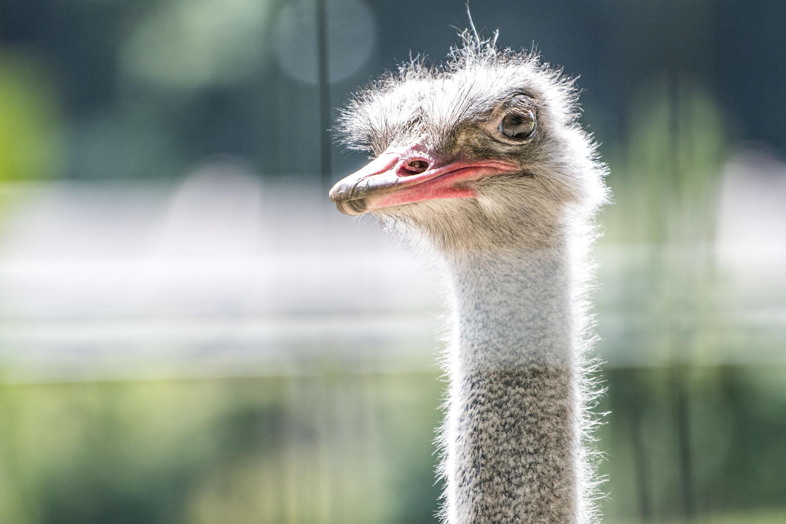 struds english aalborg zoo rabat