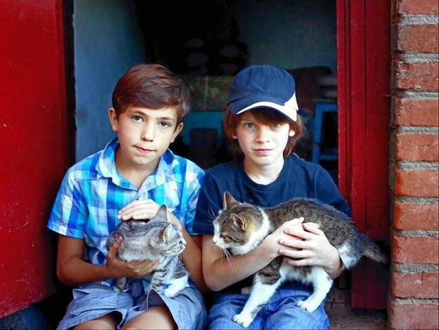 Her samles katte og børn - til hygge og leg. Foto: Agria.