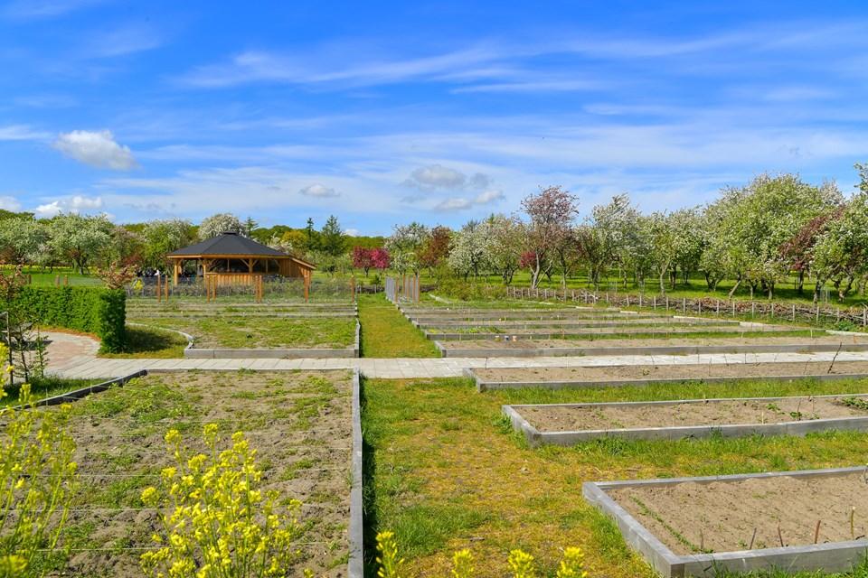 Skolehaverne blev plantet til dagen efter, vi var på besøg.   Foto: Jesper Thomasen JESPER THOMASEN