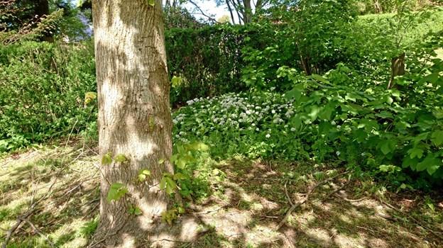 En skyggefuld plet under træet i vildnisset.