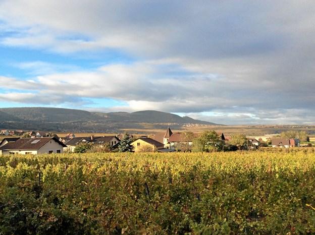 Et kig udover de smukke vinmarker. Privatfoto