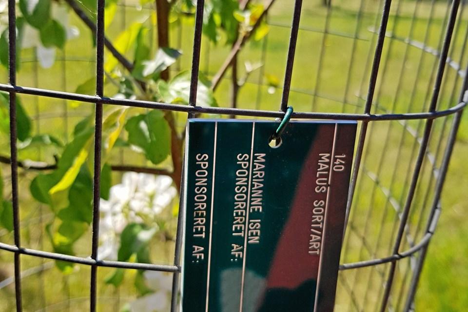 Så kan man altid finde sit træ og vise det frem til kommende generationer af gæster i Nellemanns have.