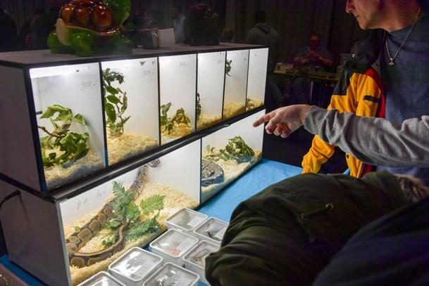 Eksotiske dyr fik nye ejere i messecentret