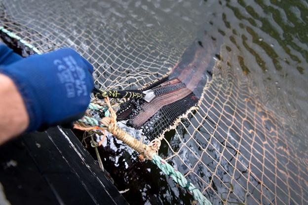 Netmaskerne i sikkerhedsnettet er på fem centimeter, og nettet vejer knap ét ton, når det lægges ned i bassinet.