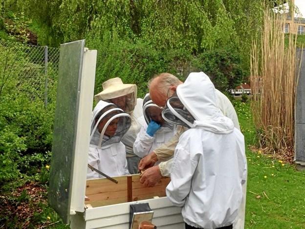 Børn i Hobro kan atter blive klogere på biernes verden. Privatfoto