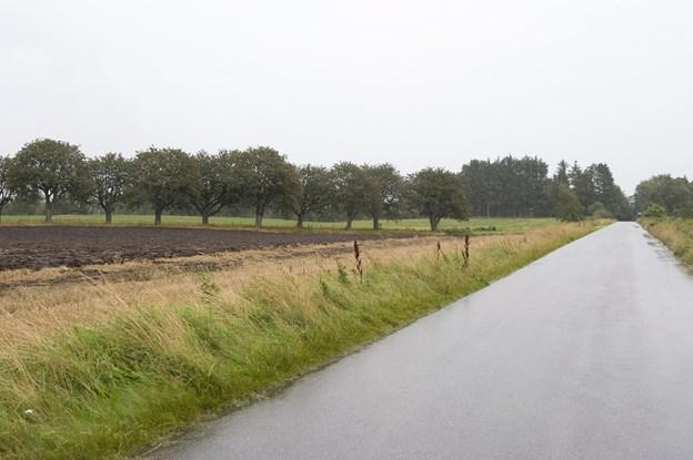 Tilkørslen til det nye område vil ske ad Langtvedvej - og det ligger med Nellemanns Have som nabo. Arkivfoto: Carl Th. Poulsen
