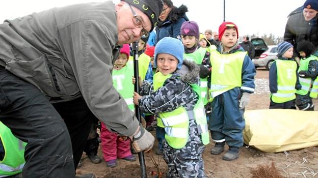 Den 3-årige David fra Brovst Børnehave og Vuggestue planter sit træ. Foto: Flemming Dahl Jensen