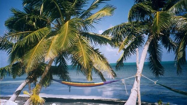 Måske er det en ide, at vælge hængekøjen her, når der ellers er lavsæson på Bahamas