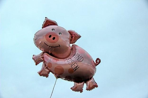 """""""Vind grisen"""". Det var vistnok en slagtet gris og ikke den flyvende gris. Foto: Hans B. Henriksen Hans B. Henriksen"""