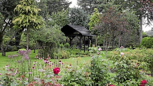 Der er mange store staudebede, løgplanter og mange roser i haven. Foto: Peter Jørgensen